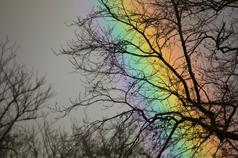 rainbow on moor poolJanuary 15 2018Print