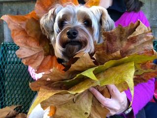 Leaf it to Sleepy Hollow