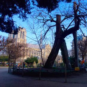Commencez bien l'année 2021, prenez du recul avec le plus vieil arbre de Paris!