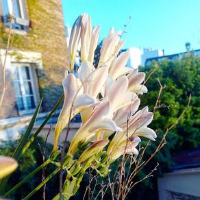 Il était une fois une fleur sur un balcon...