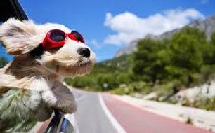 dog in car 2.jpg
