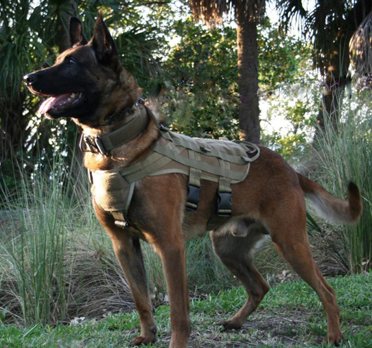 mike-ritland-personal-protections-dogs
