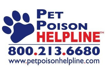 Essential Oil and Liquid Potpourri Poisoning in Dogs and Cats
