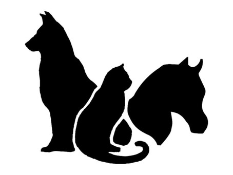 Help us find the right veterinarian and you will receive a $1000.00 finder's fee.