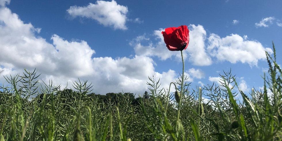 Poppy%25201_edited_edited.jpg
