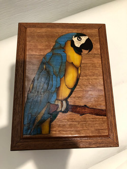 PB#323 French Marquetry Inlay Blue & Yellow Macaw $120 macaw 6