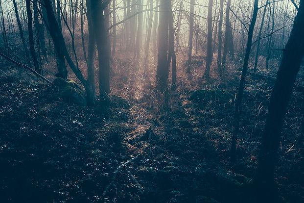 dark-forest-1081991_1920.jpg