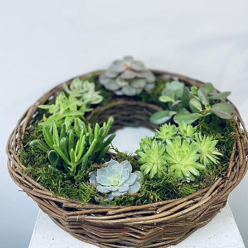 Succulent Babet ring - 40cm