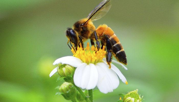 423280-bee