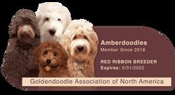Amberdoodles GANA (1)
