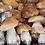 Thumbnail: Белый гриб (экстра) Свежий