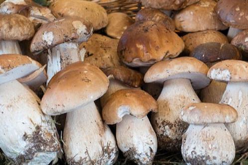 Белый гриб (экстра) Свежий