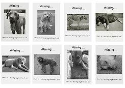 18_dogposters copy2.jpg