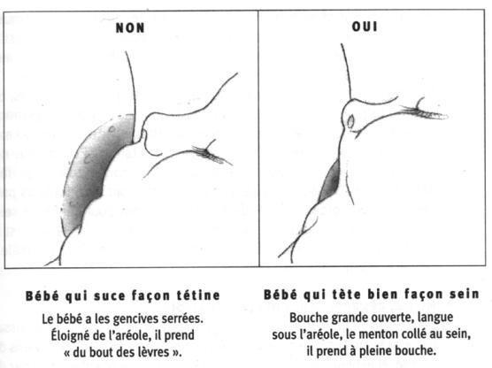 positionnement de la bouche du bébé lors de l'allaitement au sein