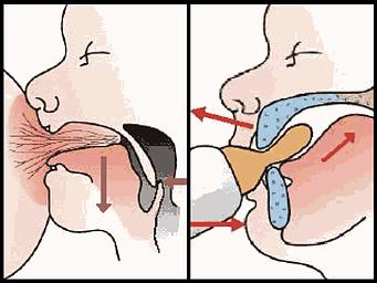 Position de la langue allaitement maternel vs biberon