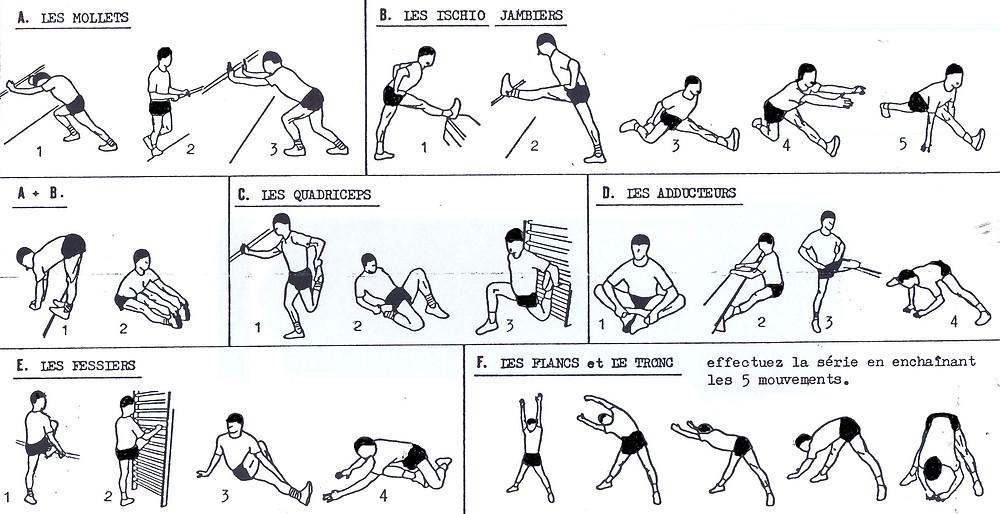étirements de chaque groupe musculaire