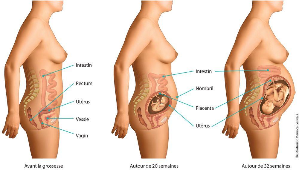 la posture se modifie suivant le stade de la grossesse, la place des organes également