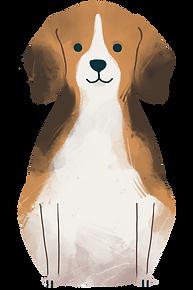 Hundetraining, Beratung, Kurse