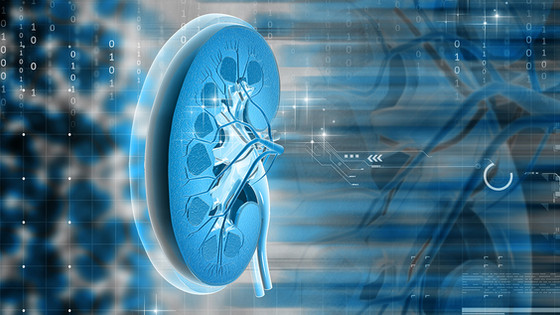 The Seven Kidney Functions