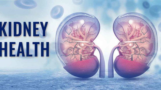 3 Important Facts About Why Your Kidneys Are Important