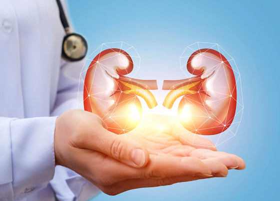 Supplements That Can Improve Your Kidney Health