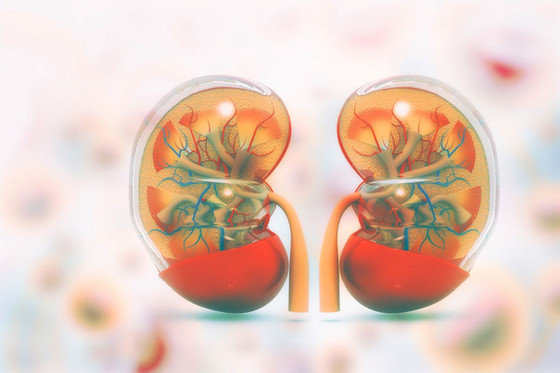 Healthy Kidneys And Ways Improve Them
