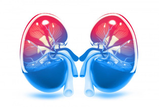 Drinking Water & Your Kidneys