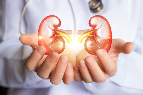 Key Reasons Why You Should Take Care Of Your Kidneys