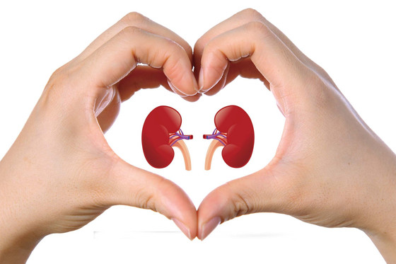 Ways You Can Maintain Healthy Kidneys