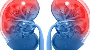 Why Are Your Kidneys So Important?
