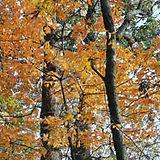 fitzsimmons_woods.jpg