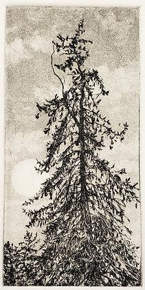 Mount Mary Pine