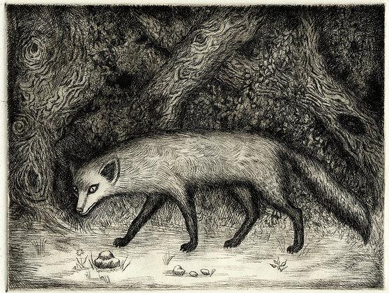 Red Fox Shining