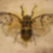 BHenke_Cicada.jpg
