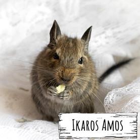 Ikaros Amos