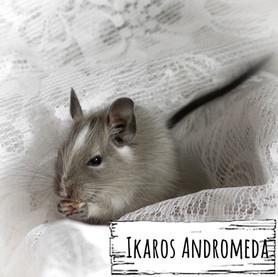 Ikaros Andromeda