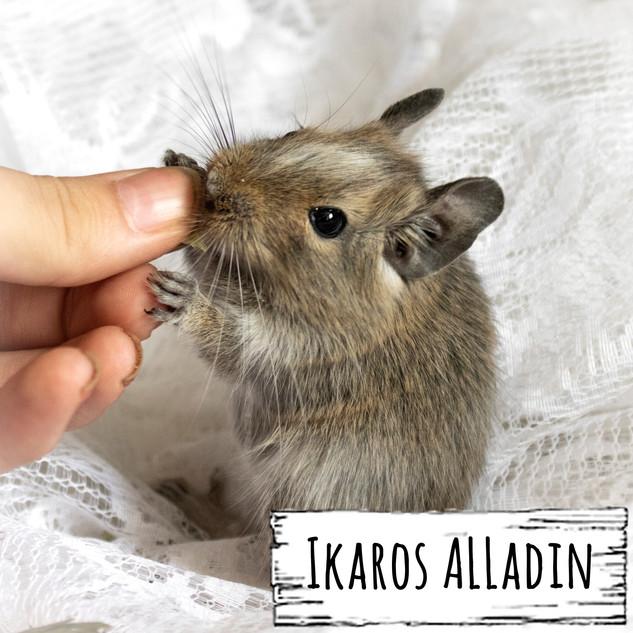 Ikaros Alladin