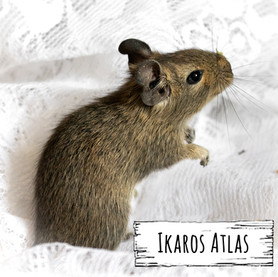 Ikaros Atlas
