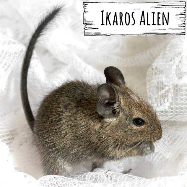 Ikaros Alien
