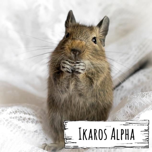 Ikaros Alpha