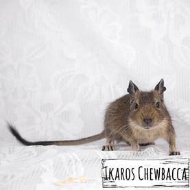 chewbacca_6471 (kopia).jpg