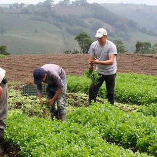 Plan País Agroalimentario es clave para la recuperación de la agroindustria en Venezuela