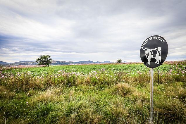 Koeijenfontein_-60.jpg