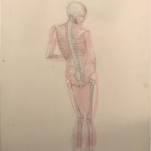 Master Drawing Bones