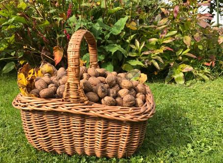 Wat heeft het rapen van walnoten te maken met perspectief?