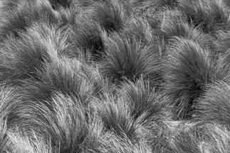 Coastal Grass, Blairgowrie