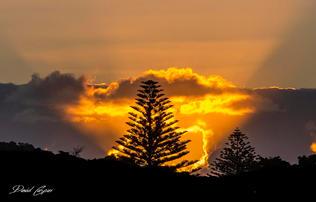 Norfork Pine Sunset