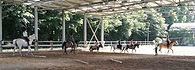 scuola equitazione Lombardia, scuola dressage, scuola equitazione Milano, scuola equitazione Giuseppe Utili, scuola equitazione, dressage Milano, dressage Lombardia