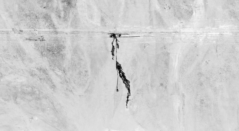 Palmyre1.jpg