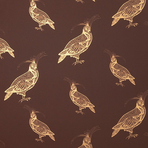 FANCY PIGEON | GOLD ON ESPRESSO